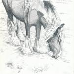 traveller-pony